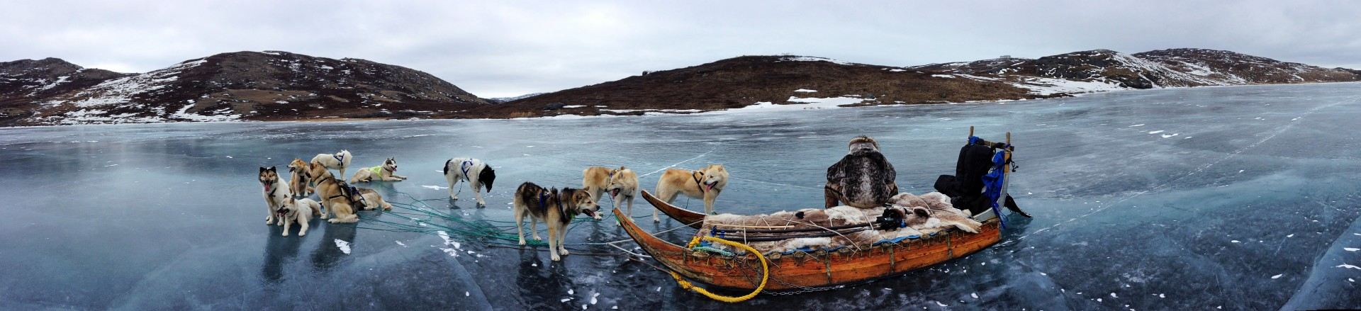 Dogsled Panoramic - Greenland