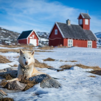 The Boss - Greenland